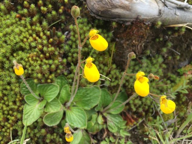 Strange looking pretty flowers